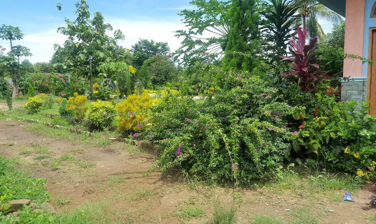 5. Plants grow very well in the tropics