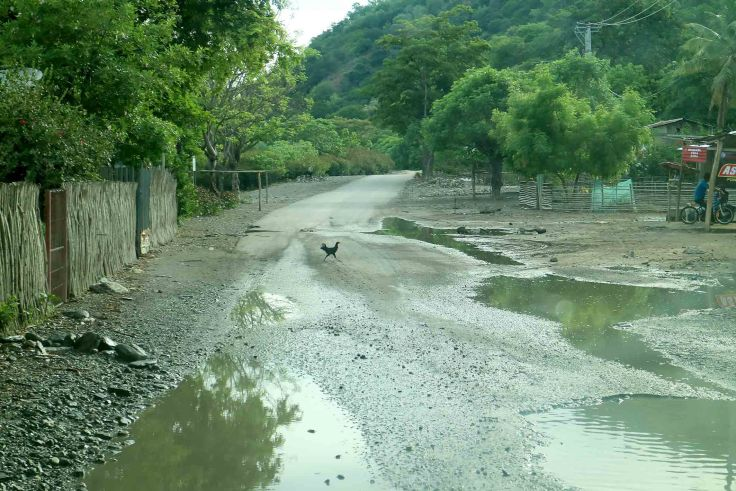 15-main-road-to-dili-with-chicken-crossing-the-road