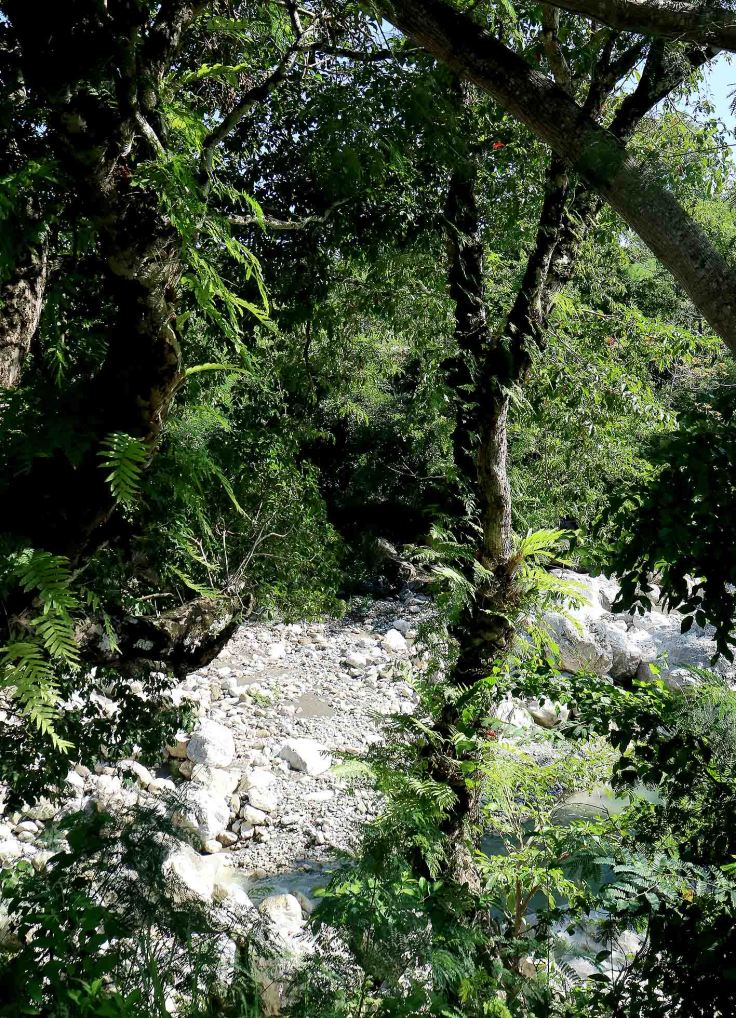 in-this-area-epiphytes-festoon-many-of-the-trees